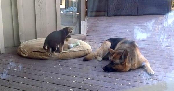 kutya-video