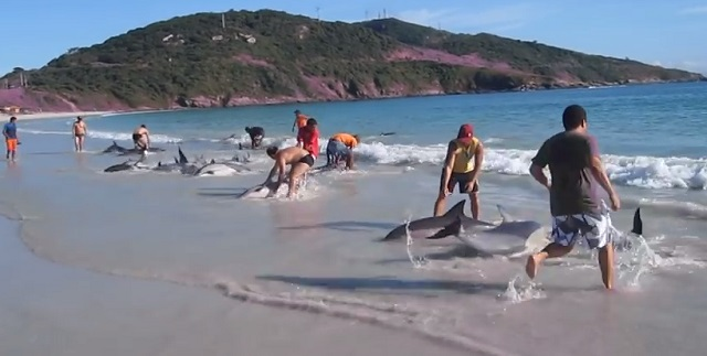 delfin-mentes2