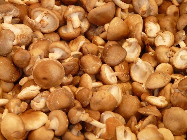A Shiitake gomba harcol a rák ellen, csökkenti a koleszterinszintet és erősíti az immunrendszert!
