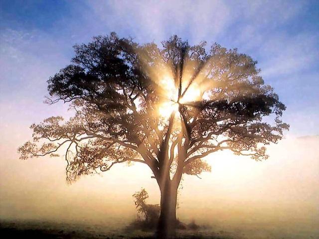 A béke és a harmónia megteremtése az életedben – Huszadik adventi lelkigyakorlat