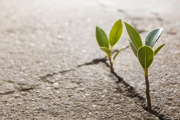 Csalogasd vissza az életedbe a reményt – Tizenhatodik adventi lelkigyakorlat