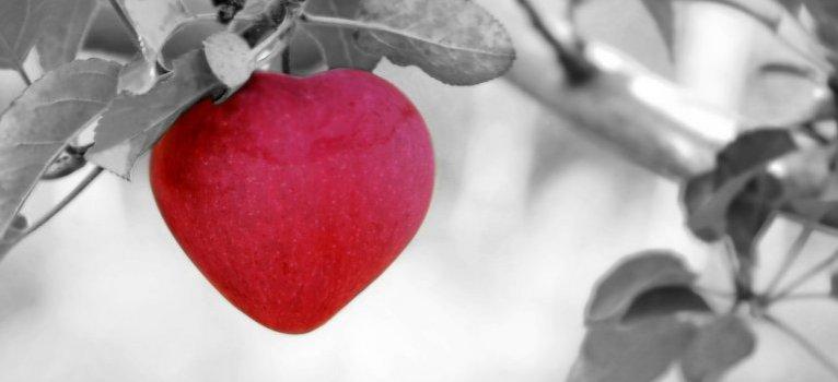Egy szívszorító, tanulságos történet egy almafáról és egy kisfiúról!