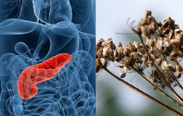 4 természetes gyógymód, amivel megvédheted a hasnyálmirigyedet!