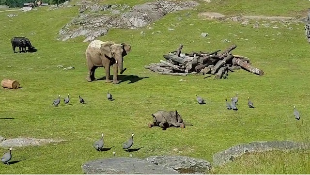 Anyjához rohan vigaszért a madarak kergetése közben elesett kiselefánt
