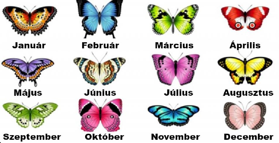 Válaszd ki a születési hónapodnak megfelelő pillangót és nézd meg mit árul el a személyiségedről!