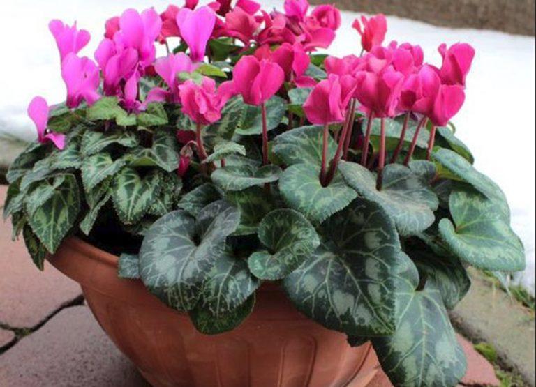 Fagytűrő növények, melyeket télen is tarthatunk a teraszunkon!