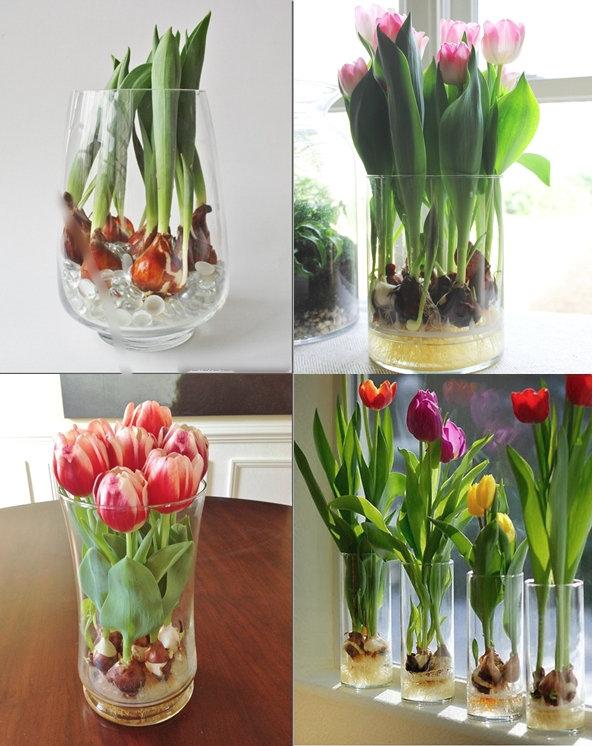 Ültess tulipánt az ablakpárkányra! Most megtudhatod, hogy miként kell!