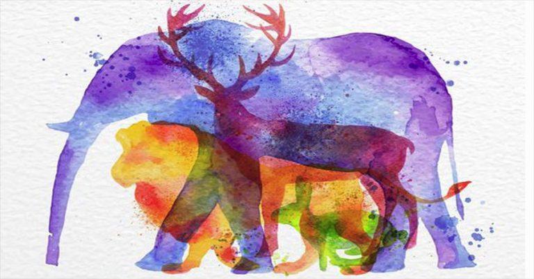 Melyik állatot látod meg először? Ez a személyiségteszt sok mindent elárul a belső erődről!