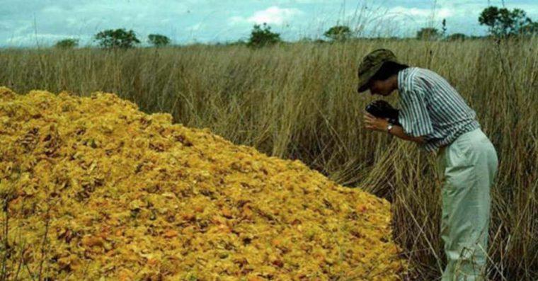 Egy üdítőt gyártó cég 16 éven keresztül egy letarolt helyre hordta a narancshéjat! Ez lett az eredménye!