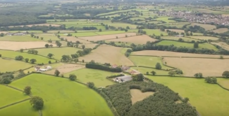 Elhunyt felesége emlékére több 1000 fát ültetett, 17 évvel később így néz ki a hely