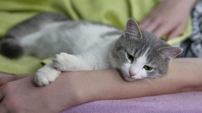 Együtt alszol a macskáddal? Ha igen, ezekről a dolgokról feltétlenül tudnod kell!