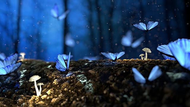 A pillangók spirituális üzenethordozók. Ez az, amit üzennek számodra!