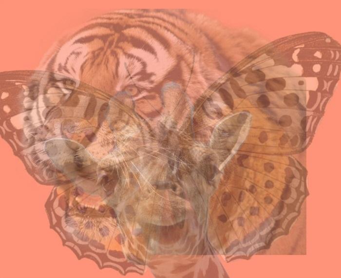 SZEMÉLYISÉGTESZT: Az első állat, amit a képen meglátsz elárulja a rejtett személyiséged