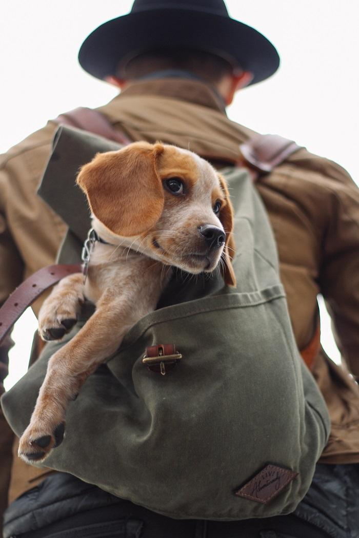 4 bámulatos kutyaképesség, ami téged is ámulatba ejt!