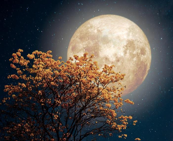 November 12.: Telihold a Bika jegyében! Segít megszabadulni a múlttól, és teljesíti a jövőbeli kívánságainkat!