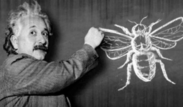 """Albert Einstein: """"Ha a méhek valaha eltűnnek a Földről, az emberiségnek csak négy éve lenne hátra"""""""