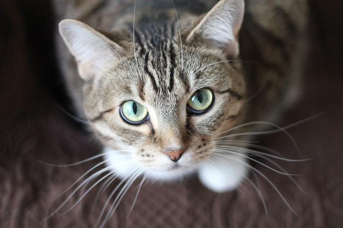 A macskatartás előnyei: Nyugalmat, harmóniát és jólétet varázsol az otthonodba!