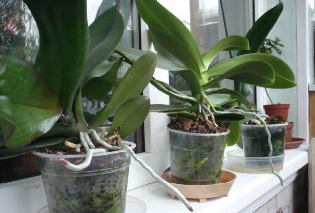 Ezzel a tápszerrel azokat a növényeket is életre keltheted, amelyekről már teljesen lemondtál