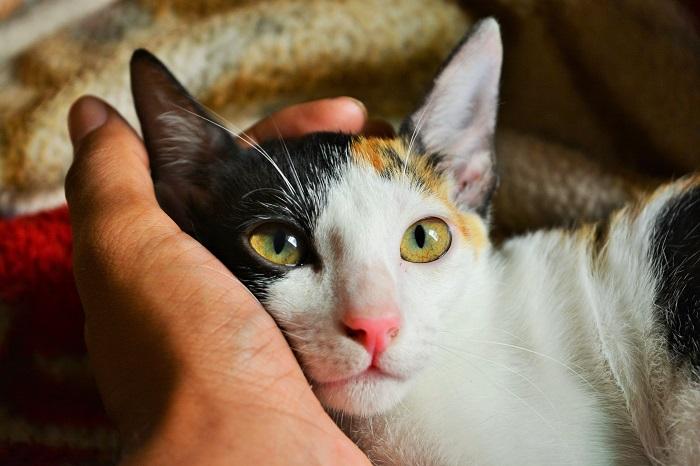 Fogadj örökbe egy cicát, és számos betegségtől megszabadulhatsz!