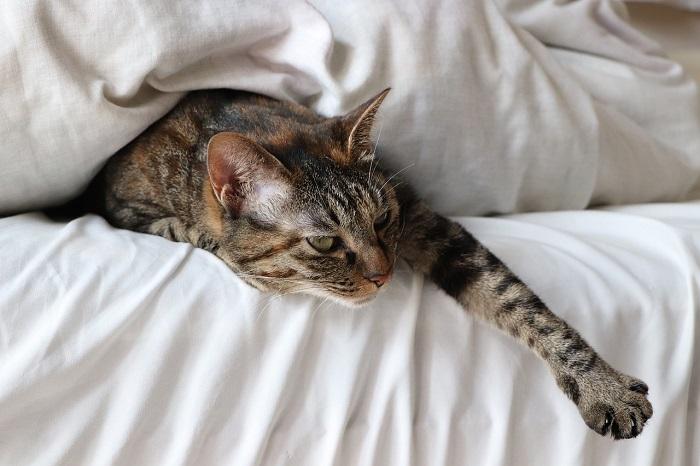 A macska figyelmeztet, ha negatív energia van a házban – Figyelj ezekre a jelekre!