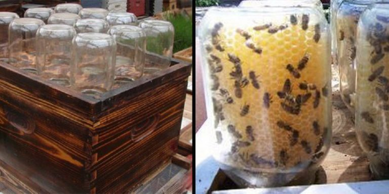 Így készíthetsz befőttesüvegekből méhkaptárt!