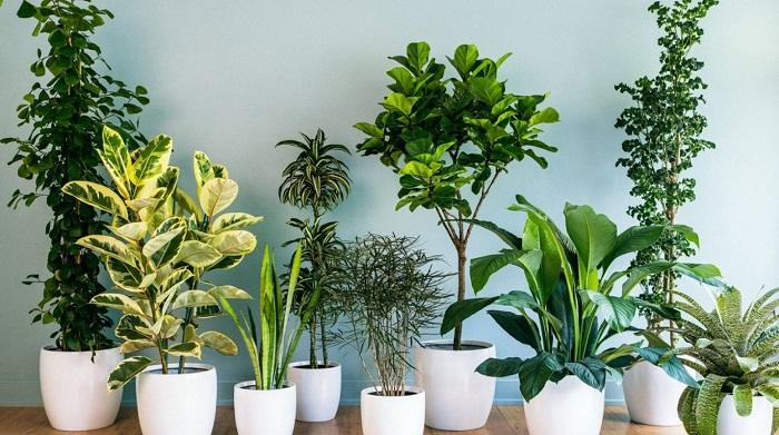 8 szobanövény, ami pozitív energiával árasztja el az otthonod!