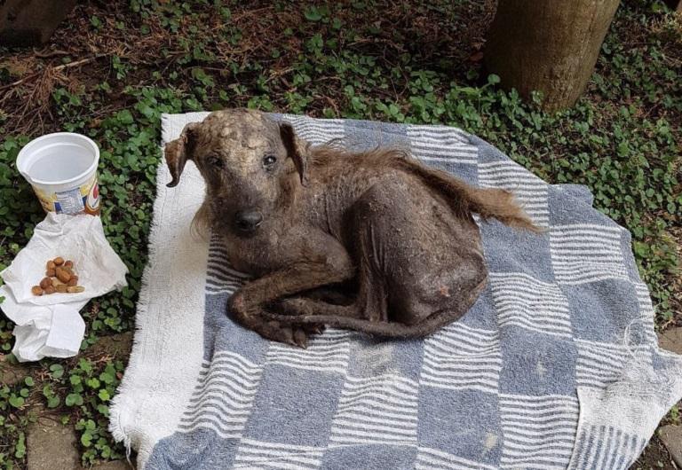 Majdnem elpusztult a haldokló kiskutya, amikor egy angyal rátalált – A szeretet és törődés csodát tett nála