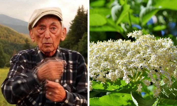 """Híres román fitoterapeuta: """"A bodzatea sokkal jobb, mint az aszpirin"""""""