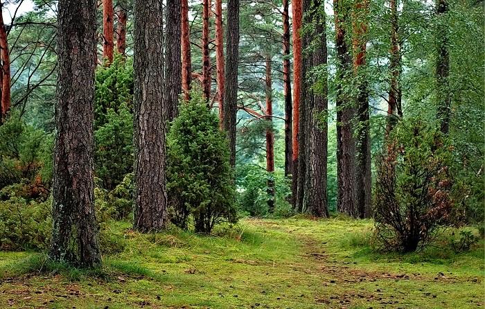 """A japán """"Shinrin-yoku""""- azaz erdő-fürdő: ezért olyan fontos, hogy gyakran kijárj az erdőbe"""