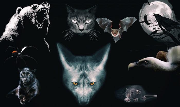 Válassz egy állatot az alábbiak közül, és személyiséged legsötétebb oldalára derülhet fény!