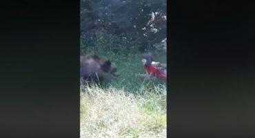 medve-kislany.jpg